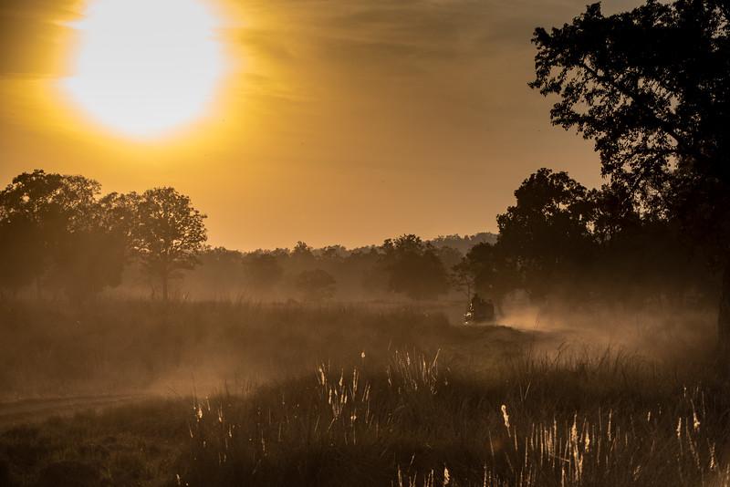 Sunrise safari, Kahna National Park, India