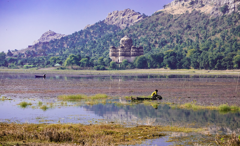 Harvesting water chestnuts, near Orchha, India