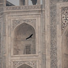 Bird, Taj Mahal, Agra, India
