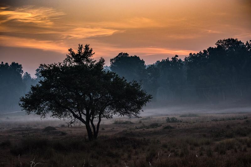 Sunrise, Kahna National Park, India