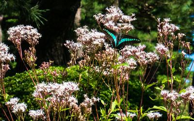 Butterfly, Kanazawa Garden, Japan