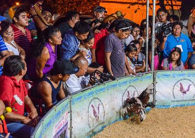 Cockfight, Cedral, Cozumel, Mexico