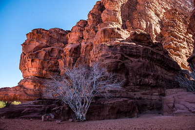 White Tree, Wadi Rum, Jordan