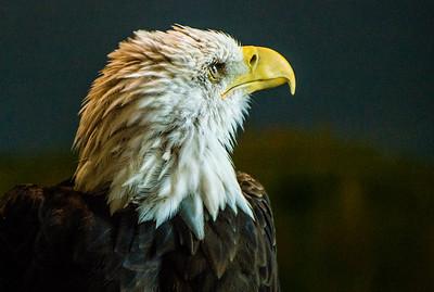 National Eagle Center, Wabasha, Minnesota