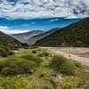 Horses and donkeys grazing on dry riverbed, near Salta, Argentina