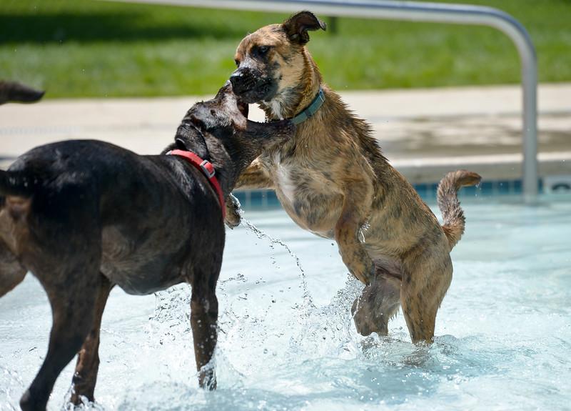 HUMANE SOCIETY DOGS AT POOL