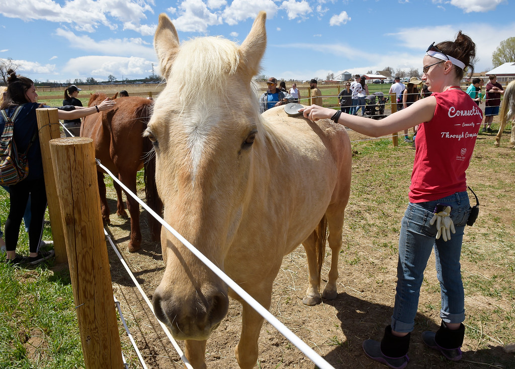 . ERIE, CO - APRIL 28: Niblet is brushed by volunteer Christina Hack during the Luvin Arms Animal Sanctuary Springfest April 28, 2019. (Photo by Lewis Geyer/Staff Photographer)