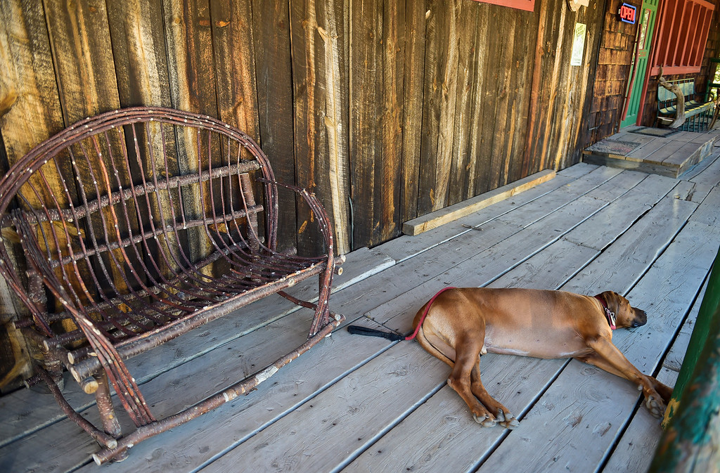 . WARD, CO - SEPTEMBER 13, 2018: After a long day of hiking, Timber rests on the front porch of the Millsite Inn in Ward Sept. 13. The historic restaurant, which opened in the mid-late 1930s, is closing at the end of this month. (Photo by Lewis Geyer/Staff Photographer)