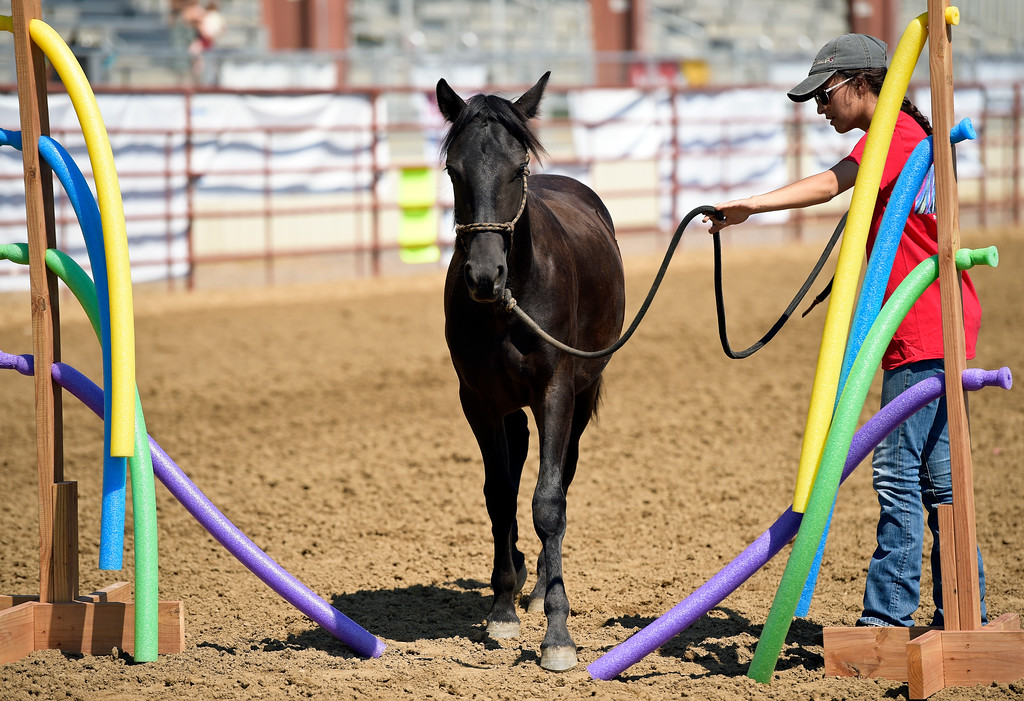 . Spirits of the West 4-H club member Reilly Dhaliwal, 17, walks Butler through an obstacle course during the mustang showcase at the Boulder County Fair Tuesday. To view more photos and a video visit timescall.com. Lewis Geyer/Staff Photographer August 01, 2017