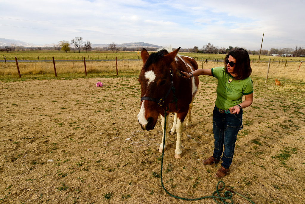 . Amanda Dumenigo, a resident of unincorporated Boulder County, brushes Lakota in a pen on Wednesday. More photos: DailyCamera.com. Matthew Jonas/Staff Photographer March 22,  2017