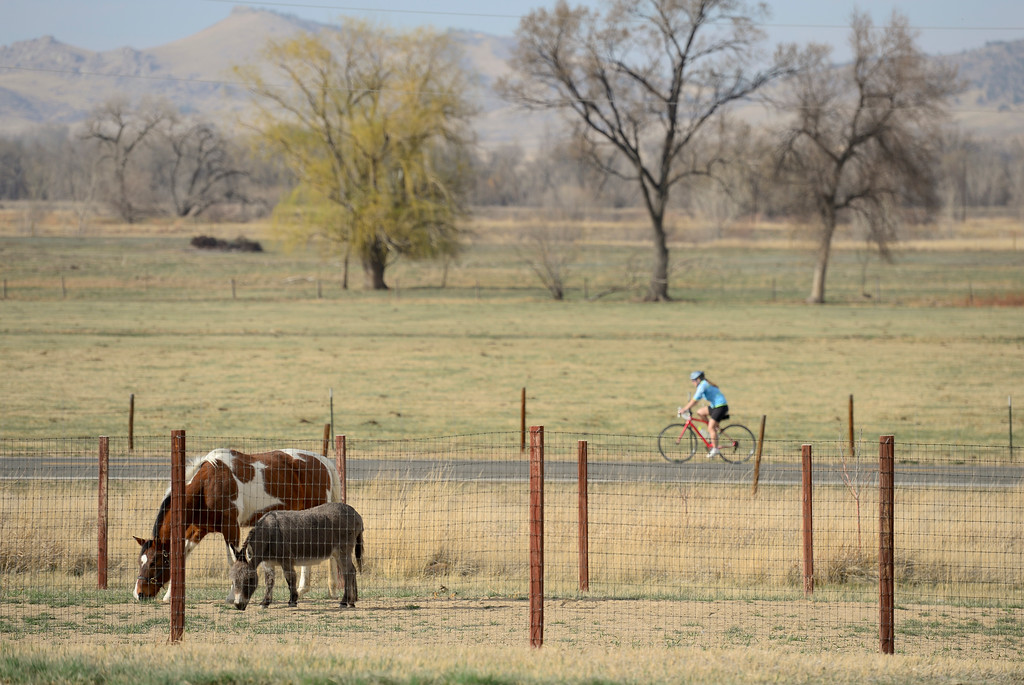 . A horse named Lakota and a donkey named Donkey graze as a cyclist passes by on Hygiene Road on Wednesday. More photos: DailyCamera.com. Matthew Jonas/Staff Photographer March 22,  2017