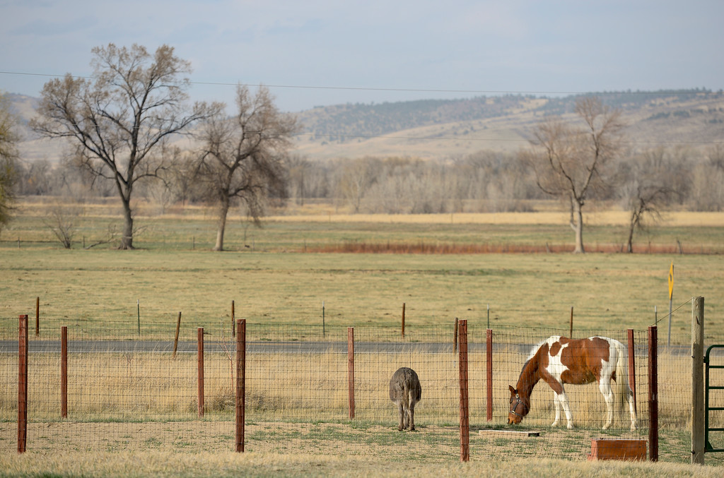 . A horse named Lakota and a donkey named Donkey graze near Hygiene Road on Wednesday. More photos: DailyCamera.com. Matthew Jonas/Staff Photographer March 22,  2017