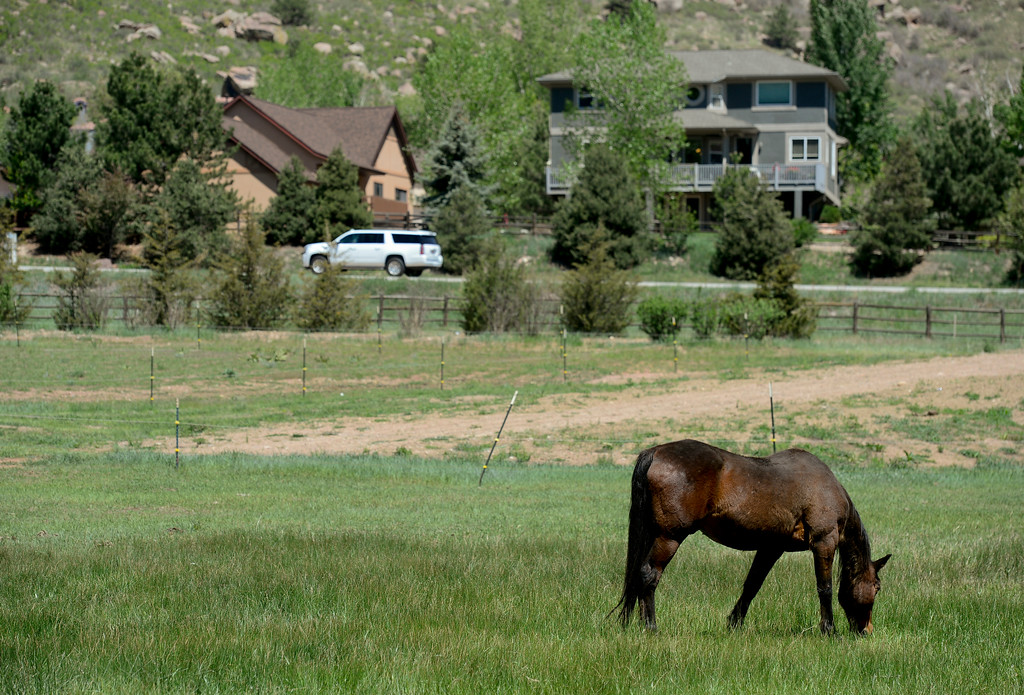 . Horses graze in a pasture in Lyons on Monday. The pasture could be used for festival parking. Planet Bluegrass has submitted a letter of intent which states that they plan on using a piece of property to the west of Planet Bluegrass Ranch as farmland, but also as a place for up to 1,200 people attending larger festivals like the Folks Festival and RockyGrass to camp out and park. More photos: DailyCamera.com. Matthew Jonas/Staff Photographer May 15,  2017