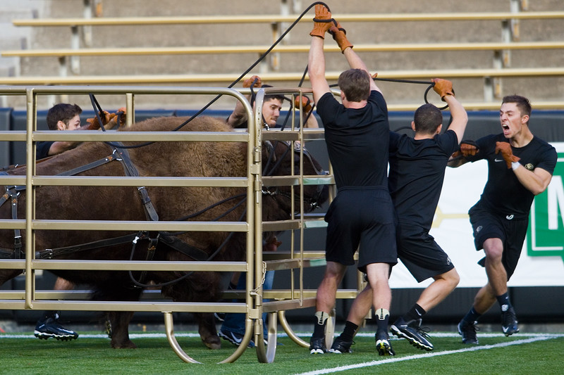 "Bobby Rukavina (left) leads a team of handlers as they practice running with Ralphie on Folsom Field at CU Boulder on Friday. <br /> More photos:  <a href=""http://www.dailycamera.com"">http://www.dailycamera.com</a><br /> (Autumn Parry/Staff Photographer)<br /> October 14, 2016"
