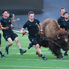 "From left to right, handlers Santiago Garza, Jacob Torres, Bobby Rukavina, Emerson McKee and Ryan Begin practice running with Ralphie on Folsom Field at CU Boulder on Friday.  <br /> More photos:  <a href=""http://www.dailycamera.com"">http://www.dailycamera.com</a><br /> (Autumn Parry/Staff Photographer)<br /> October 14, 2016"
