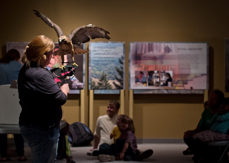 "Amy Olsen, a volunteer with Nature's Educators, introduces Pallas, an injured Red Tail Hawk, to the crowd during ""Raptor's with Nature's Educators"" as part of the 15th Annual Wild Earth Day at the University of Colorado's Museum of Natural History on Sunday. <br /> More photos:  <a href=""http://www.dailycamera.com"">http://www.dailycamera.com</a><br /> Autumn Parry/Staff Photographer<br /> April 24, 2016"
