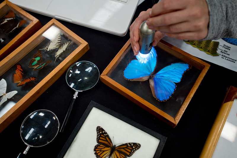 "Sarah Snow uses a Dino-Lite Microscope to highlight parts of a Blue Morpho, a butterfly native to Peru, at the University of Colorado Boulder's Museum of Natural History booth during the Rocky Mountain STEAM Fest at the Boulder County Fairgrounds in Longmont on Sunday.<br /> More photos:  <a href=""http://www.dailycamera.com"">http://www.dailycamera.com</a><br /> Autumn Parry/Staff Photographer<br /> May 1, 2016"