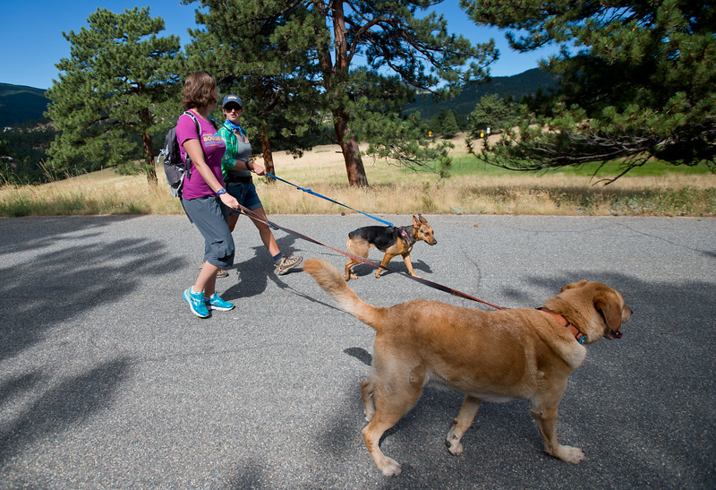 "Kat Barr (left) and Amber Erickson Gabbey walk with Clyde and Moxie as they begin the search for Geno at the Betasso Preserve on Saturday. Geno, a St. Bernard belonging to Charlie and Bretlyn Schmidtmann, went missing during the Cold Springs Fire. <br /> More photos:  <a href=""http://www.dailycamera.com"">http://www.dailycamera.com</a><br /> (Autumn Parry/Staff Photographer)<br /> July 23, 2016"