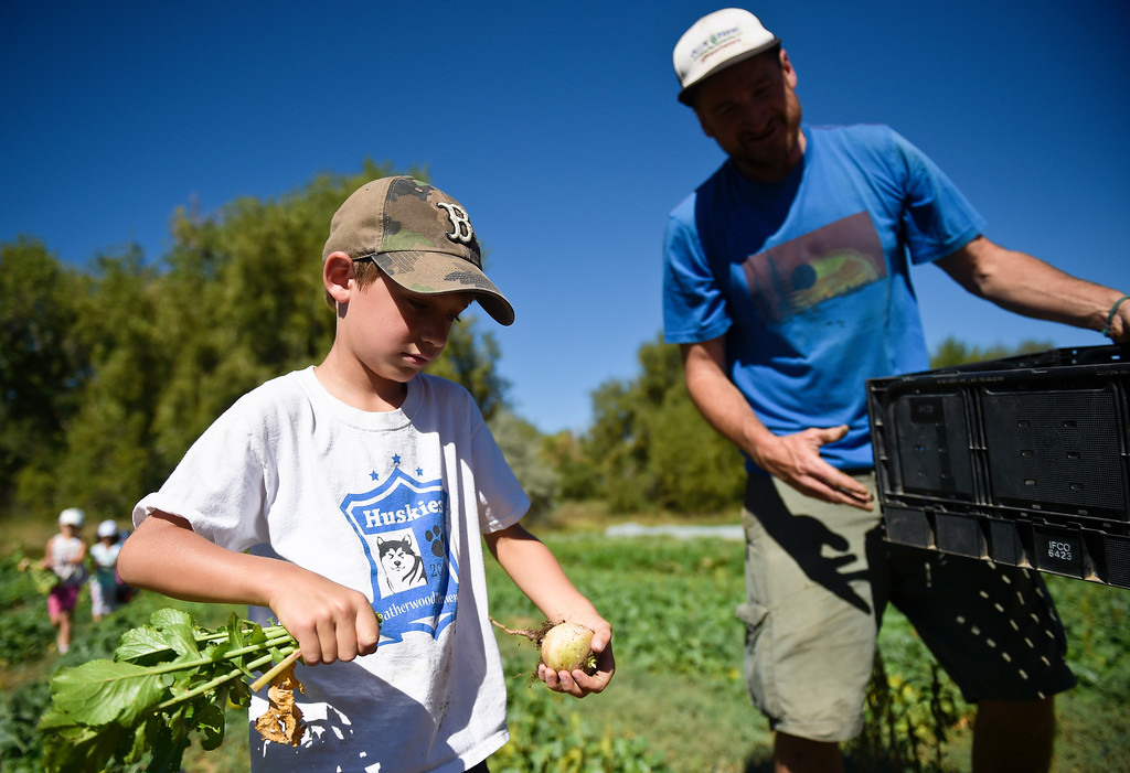 . LONGMONT, CO - SEPTEMBER 12, 2018: Heatherwood Elementary second grader LIam Landrigan removes the greens from a watermelon radish as Mark Guttridge supervises at Ollin Farms Sept. 12. Thanks to a grant from the USDA AMS Local Food Promotion Program, the BVSD School Food Project is able to send groups of students from around the district to local farms to learn from the farmers themselves. (Photo by Lewis Geyer/Staff Photographer)