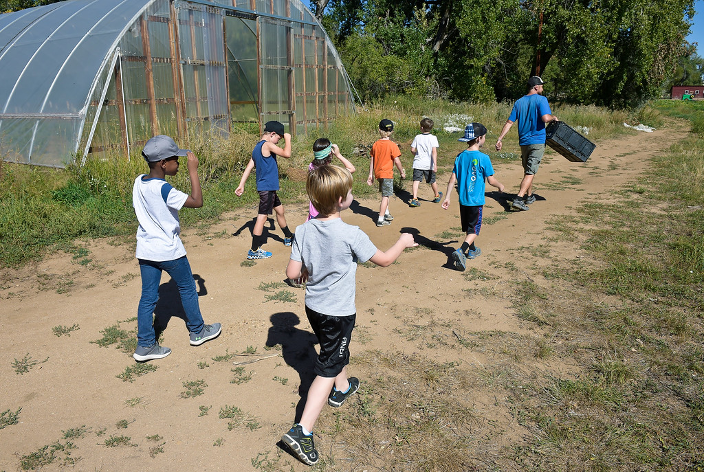 . LONGMONT, CO - SEPTEMBER 12, 2018: Heatherwood Elementary second graders follow Mark Guttridge to a radish patch at Ollin Farms Sept. 12. Thanks to a grant from the USDA AMS Local Food Promotion Program, the BVSD School Food Project is able to send groups of students from around the district to local farms to learn from the farmers themselves. (Photo by Lewis Geyer/Staff Photographer)