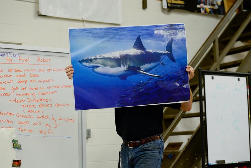 SHARKS149