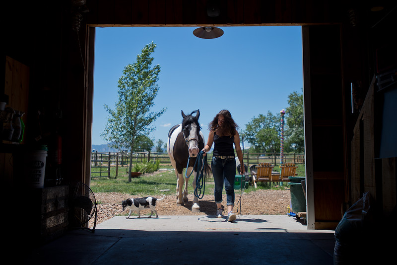 "Lily Martinelli, 16, brings Finn, a North American Spotted Draft Horse, back into the stable after working him at Three Leaf Farm in Lafayette on Wednesday. <br /> More photos:  <a href=""http://www.dailycamera.com"">http://www.dailycamera.com</a><br /> (Autumn Parry/Staff Photographer)<br /> June 15, 2016"
