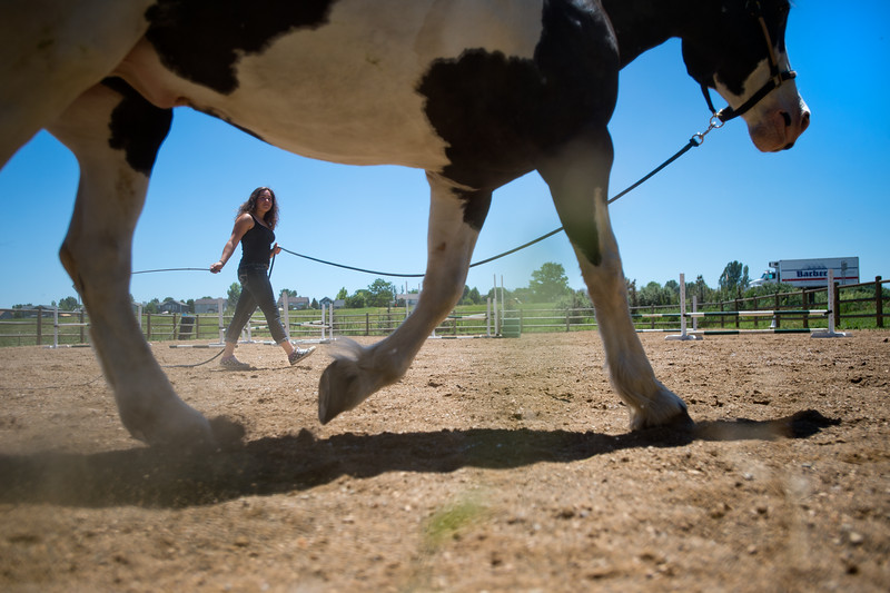 "Lily Martinelli, 16, lunges Finn, a North American Spotted Draft Horse, at Three Leaf Farm in Lafayette on Wednesday. Lily's mom Sara Martinelli was involved with the launch of a new website directory for the Boulder County Horse Association which will make it easier for others to get involved with the equestrian community in Boulder County. <br /> More photos:  <a href=""http://www.dailycamera.com"">http://www.dailycamera.com</a><br /> (Autumn Parry/Staff Photographer)<br /> June 15, 2016"