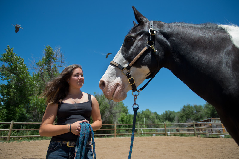 "Lily Martinelli, 16, pauses after working Finn, a North American Spotted Draft Horse, at Three Leaf Farm in Lafayette on Wednesday. <br /> More photos:  <a href=""http://www.dailycamera.com"">http://www.dailycamera.com</a><br /> (Autumn Parry/Staff Photographer)<br /> June 15, 2016"
