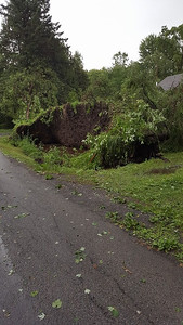 Reader  Jessica Davis Figueroa took this photo of a row of 5 trees uprooted in Canastota.