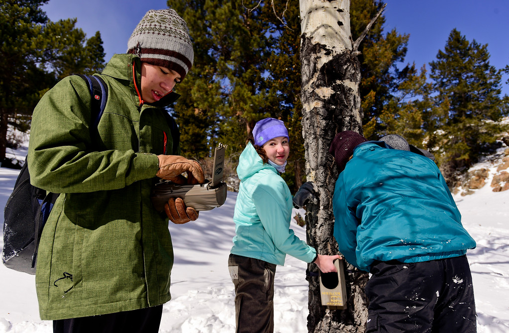 . From left: Westview Middle School seventh grader Ezra Fehlberg checks to see if a game camera is working properly while Sierra Bindseil and Zach Heil attach a camera housing to a tree at Rocky Mountain National Park on Wednesday. More photos: TimesCall.com. Matthew Jonas/Staff Photographer March 1,  2017