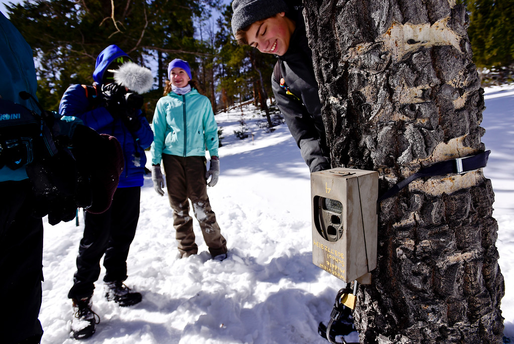 . Skyline High School student Dylan Tusinski, 15, who attended Westview Middle School, checks to see if a game camera is secured with students from Westview Middle School at Rocky Mountain National Park on Wednesday. More photos: TimesCall.com. Matthew Jonas/Staff Photographer March 1,  2017