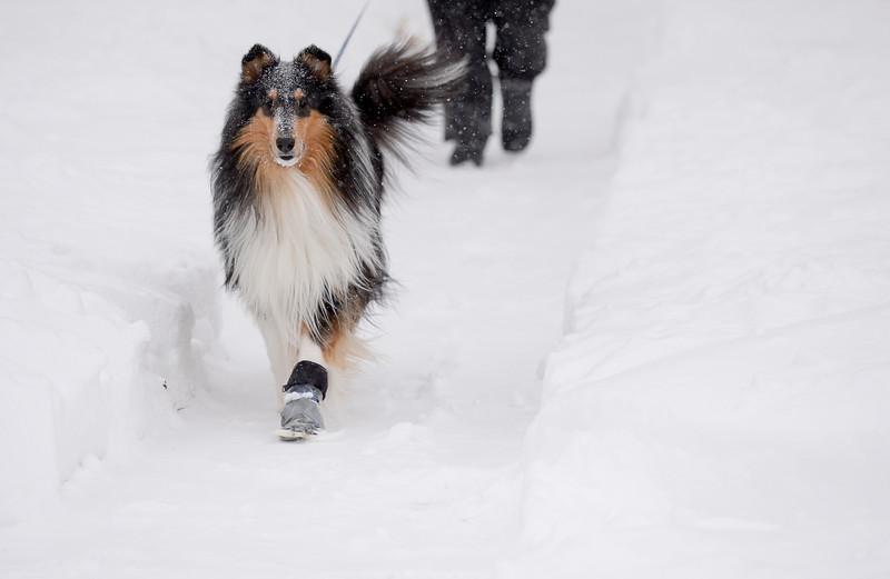 SNOW4043