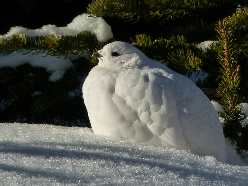 191  White beauty