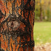 54  Bark colour after the rain