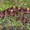170  Fungi family