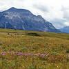 30  Wildflower meadows of Waterton Lakes National Park