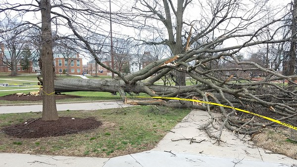 Wind Damage on March 2, 2018 at the University of Maryland