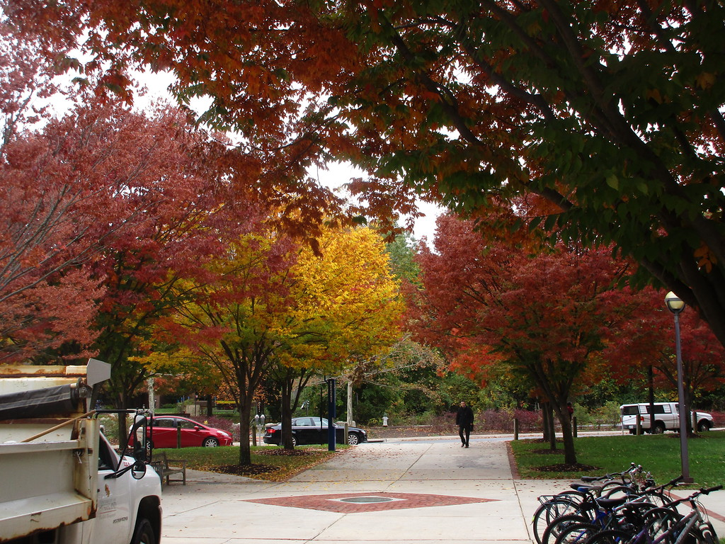 Fall color of Zelkova Trees in the Van Munching Hall Courtyard