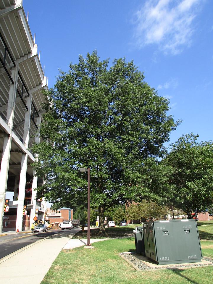 Undamaged tree one half block away.