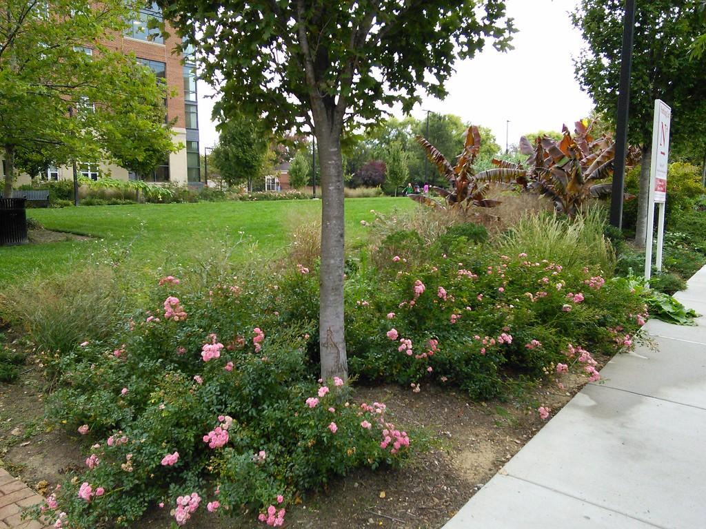 Oakland Hall Gardens