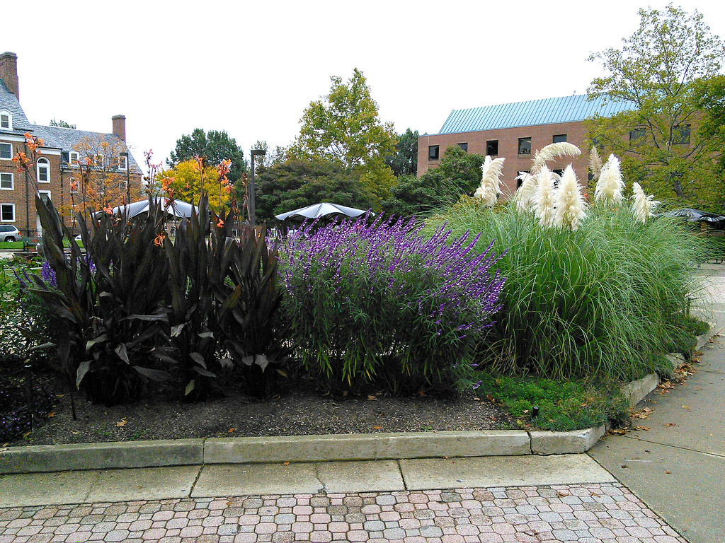 Tawes Plaza Central C-Shaped Bed Plantings
