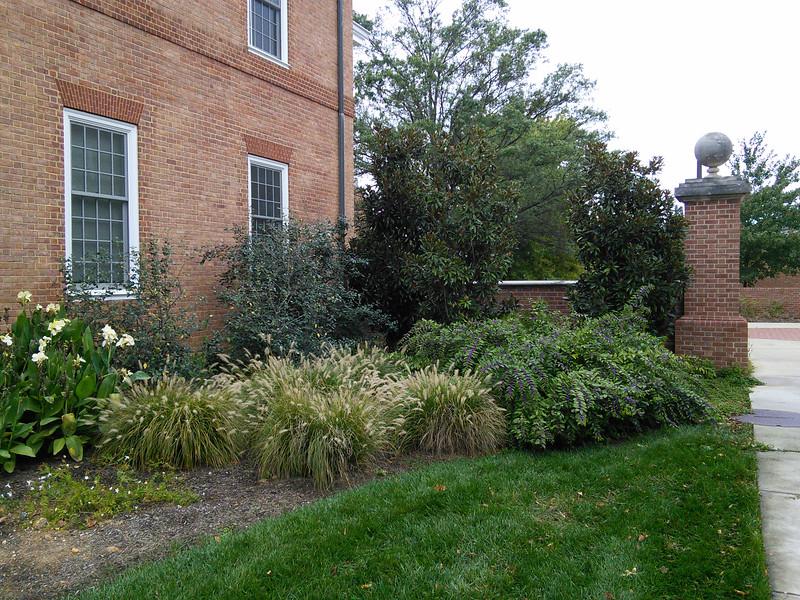 Tawes Hall Foundation Plantings