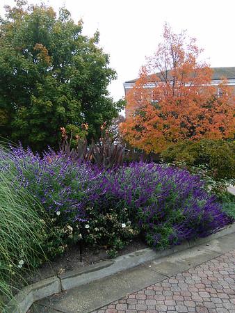 Tawes Plaza Gardens