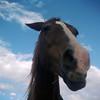 New Mexico - a horse called Radar