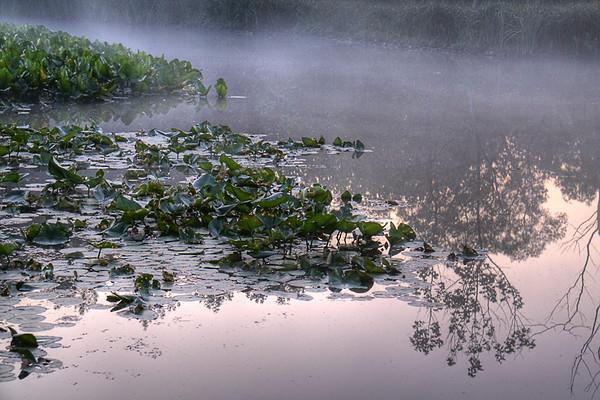 Beavermarsh June 2009