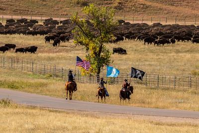2021 Custer State Park Buffalo Rounup