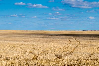Field near Sturgis