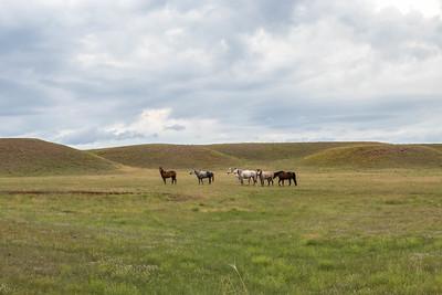 Horses near Edgemont