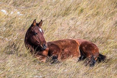 Horse near Philip, SD