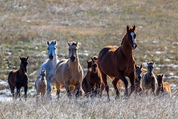 Horses near Philip, SD